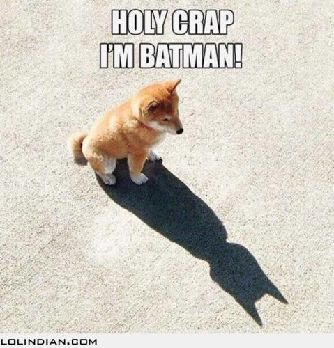 i-am-batman-puppy