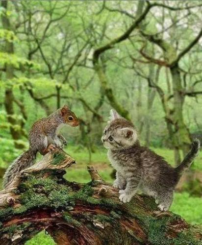 kitty and squirrel